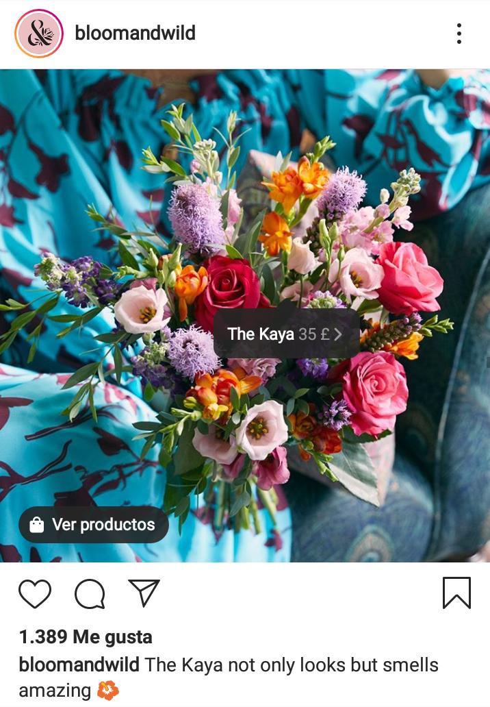 bloom-wild-instagram